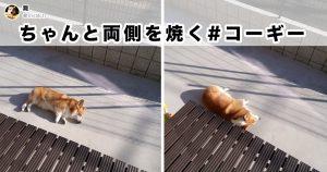 昼寝中こそ、犬のかわいさは最高潮に達する 8選