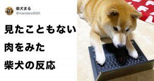 飯テロ画像を見た柴犬の反応が可愛すぎてジワるwww