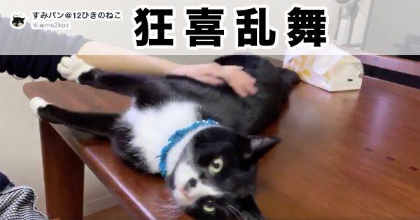 え?猫ってこんなに喜ぶもんなの?マジで?