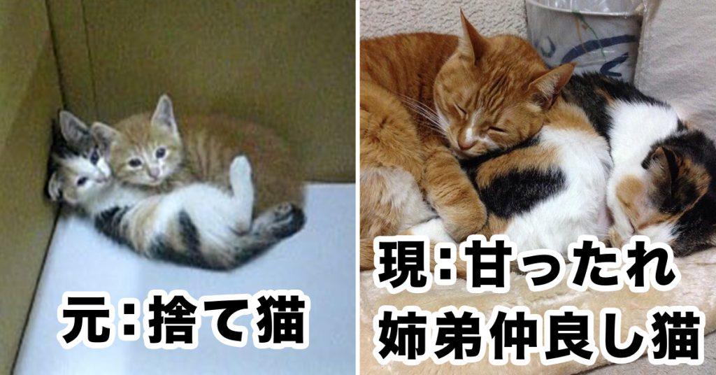 「捨てネコ姉弟」の現在にほっこり… というか若干涙目…