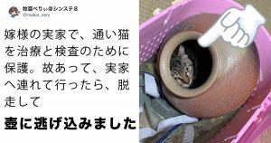 世にも珍しい「壺猫」がかわいいwww