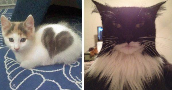 リアルに三度見した「ネコの模様」12選