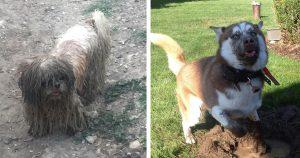 「泥だらけモンスター」と化した犬 12選