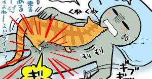 【TV前に鎮座】共感不可避のネコあるあるwww