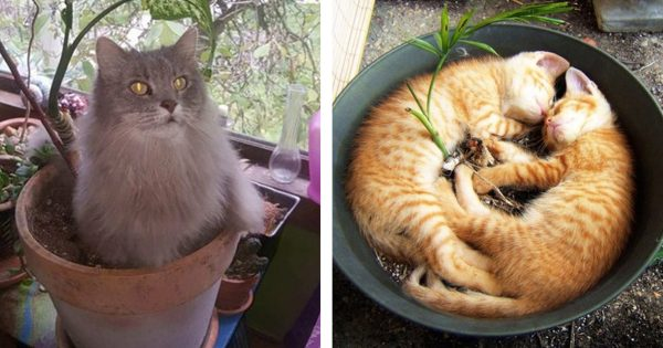 catplant