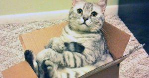 梱包中のネコ 12選