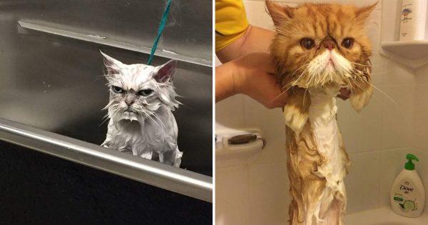 お風呂に入ったら、ネコの姿が変わりました 11選