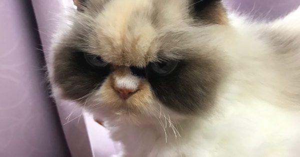 ※心は優しいよ!不思議と謝りたくなる「ブチギレ顔のネコ」