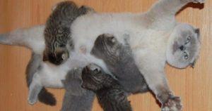 子育てに「疲労困憊」の猫ママ 13選