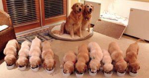 幸せ1000%な、犬の「モフモフ大家族」14選