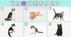 【心理テスト】惹かれる猫を選ぶと、隠れた「もう1人の自分」がわかる