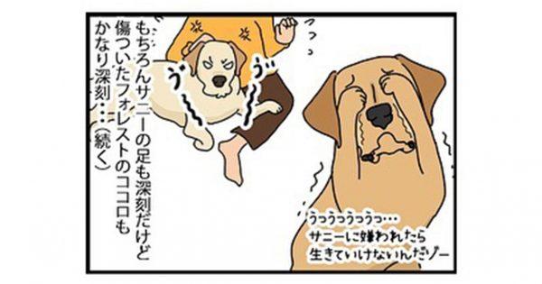 「ケンカした犬の仲直り」に、ひたすら癒されました😢