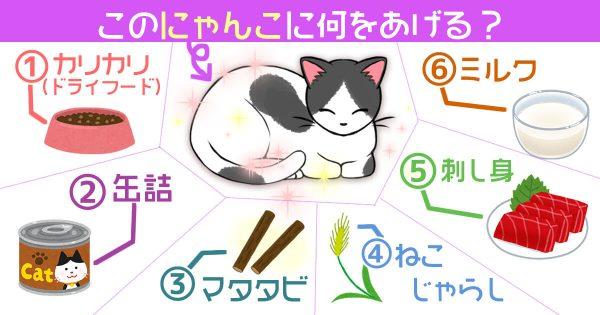 【心理テスト】あなたの性格を、ネコに例えます
