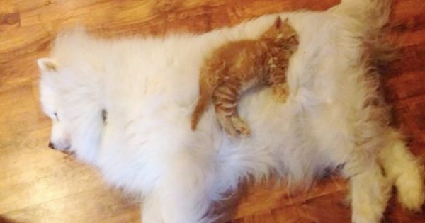 猫は犬をベッドだと思っている証拠 12選