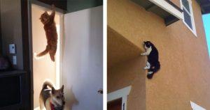 我輩は猫である。職業は忍者である。13選