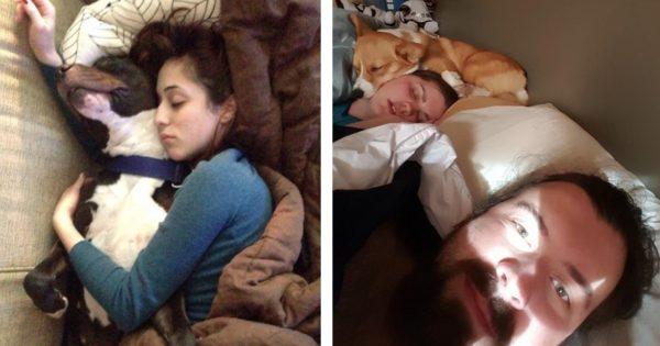 犬と眠る人が幸せになれる証拠 14選