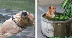 露天風呂だいすき「極楽犬」 14選