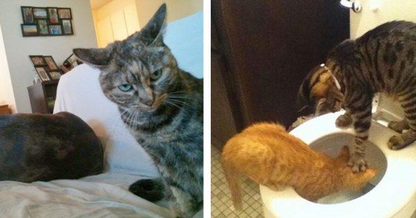 猫の「悪巧み」 13選