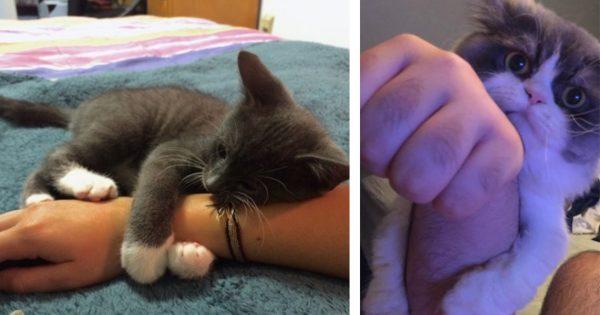 猫の抱き枕=「人間の腕」らしい 13選