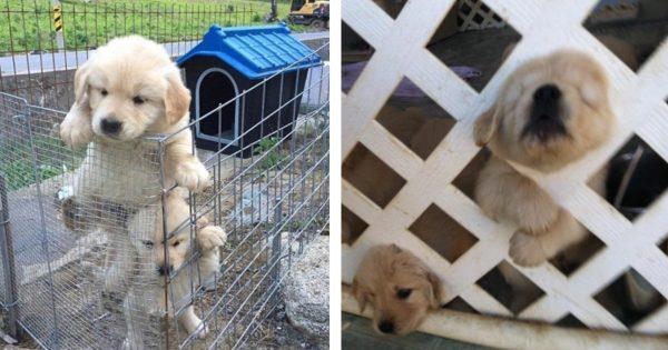 dogprisonbreak