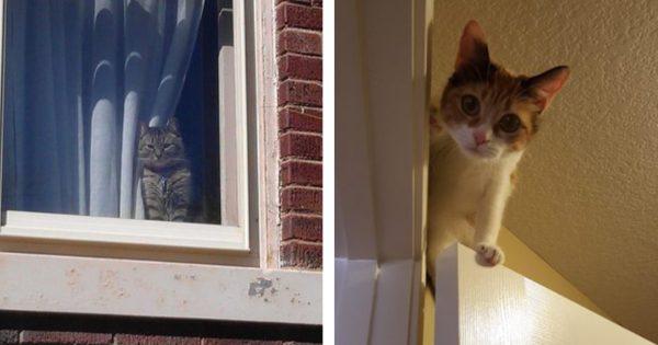 猫が「監視カメラ」であることの証明 13選