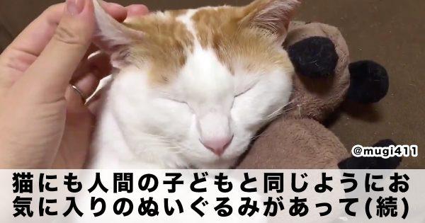 「猫×ぬいぐるみ」の破壊力ご存知?😇