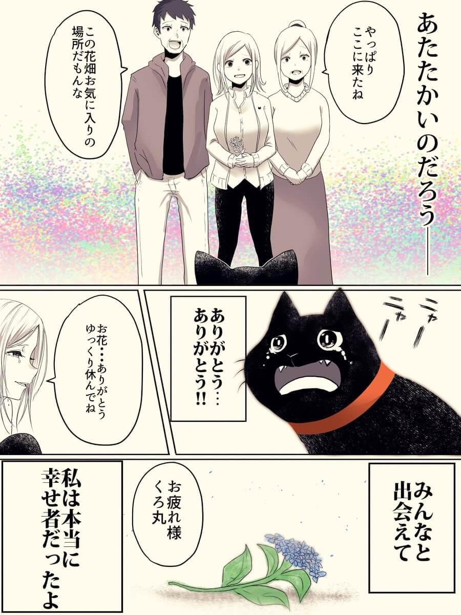 捨て猫が人間から愛情をもらう話04