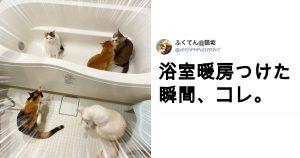 「暖をとる猫」を見るだけで、心はポカポカに 10選