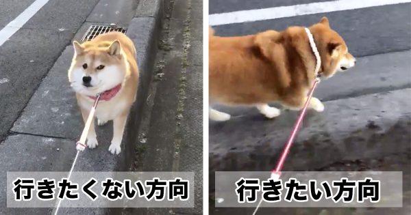 「超わかりやすい性格」の柴犬www