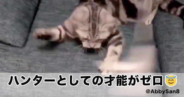 ハンター能力ゼロな猫が面白過ぎて腹筋砕けた