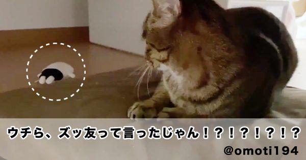 猫にぬいぐるみをあげたら、予想外の反応されたwww