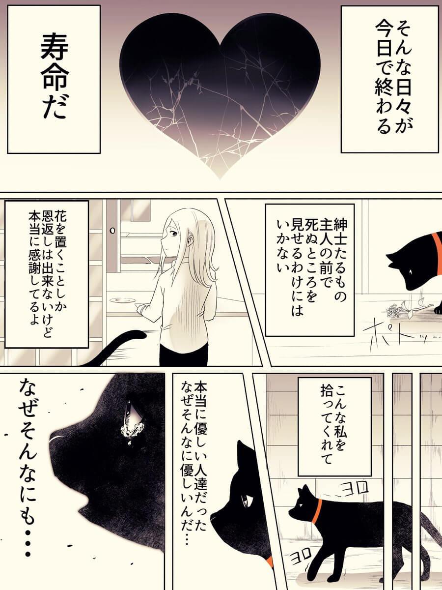 捨て猫が人間から愛情をもらう話03