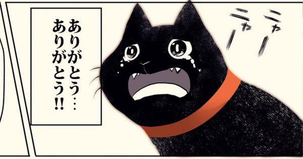 【涙腺崩壊】黒猫が「最後の瞬間」をどこで過ごすかというと…