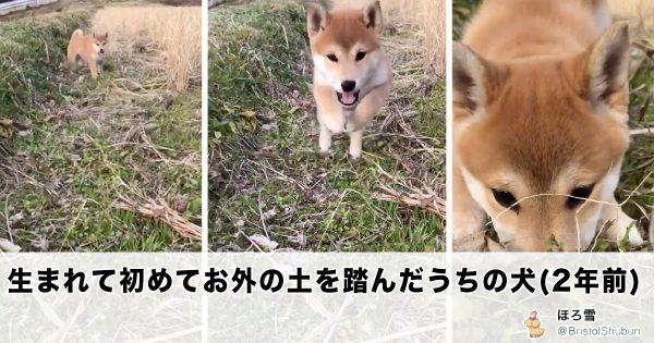 子犬が土を初体験したときの反応 = 最の高!