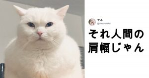 「もう人間じゃん」ってなる猫 9選