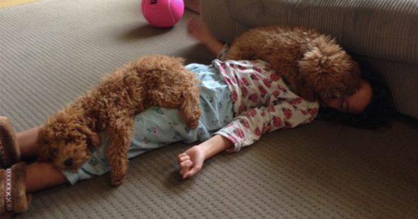 毛布がなくても犬がいれば良いじゃない 14選