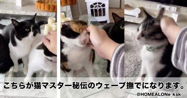 猫マスター秘伝の「ウェーブ撫で」が究極奥義すぎる件