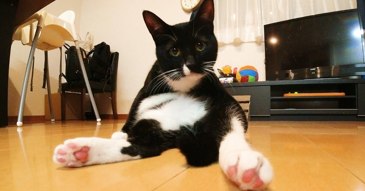 SNSで拡散される猫動画を撮影したい 5選