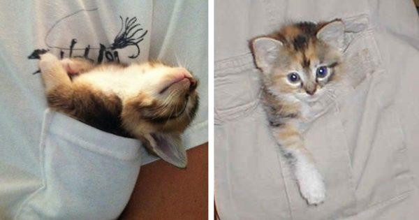 猫はポケットから生まれるという噂 12選