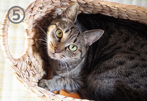 猫 ネコ ストライクゾーン 心理テスト