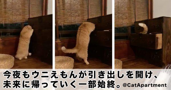 【実写版】猫型ロボットが未来に帰るシーン