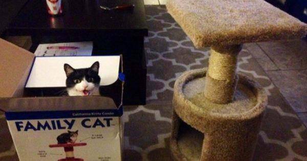 思い通りに行かないのがネコの良さ 13選