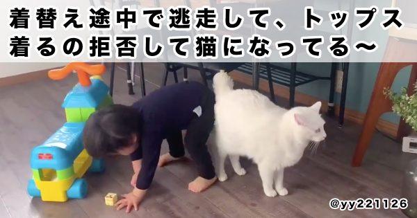 猫と「猫ごっこ」をする子どもに、超癒されました