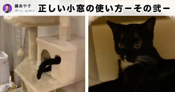 @fuji_ayako