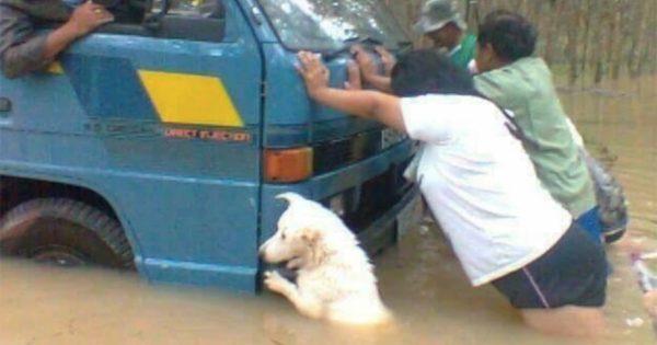 犬 = 最強の助っ人 12選