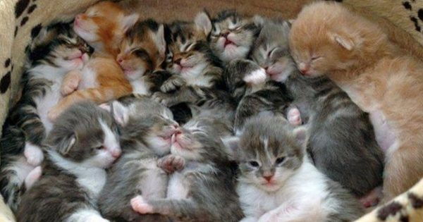 子猫のモフモフ弁当1つください 12選