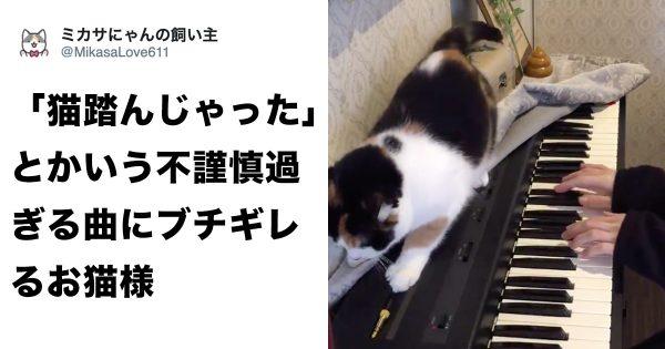 「猫踏んじゃった」を猫が聴くとやっぱりブチ切れるらしい