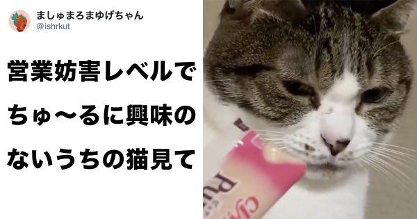 ちゅ〜るにも攻略できない猫がいたのか!?