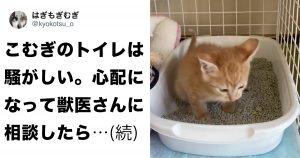 「子猫のトイレ」が騒がしい理由www