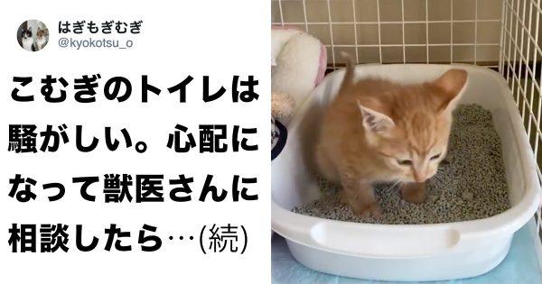 toiletkitty